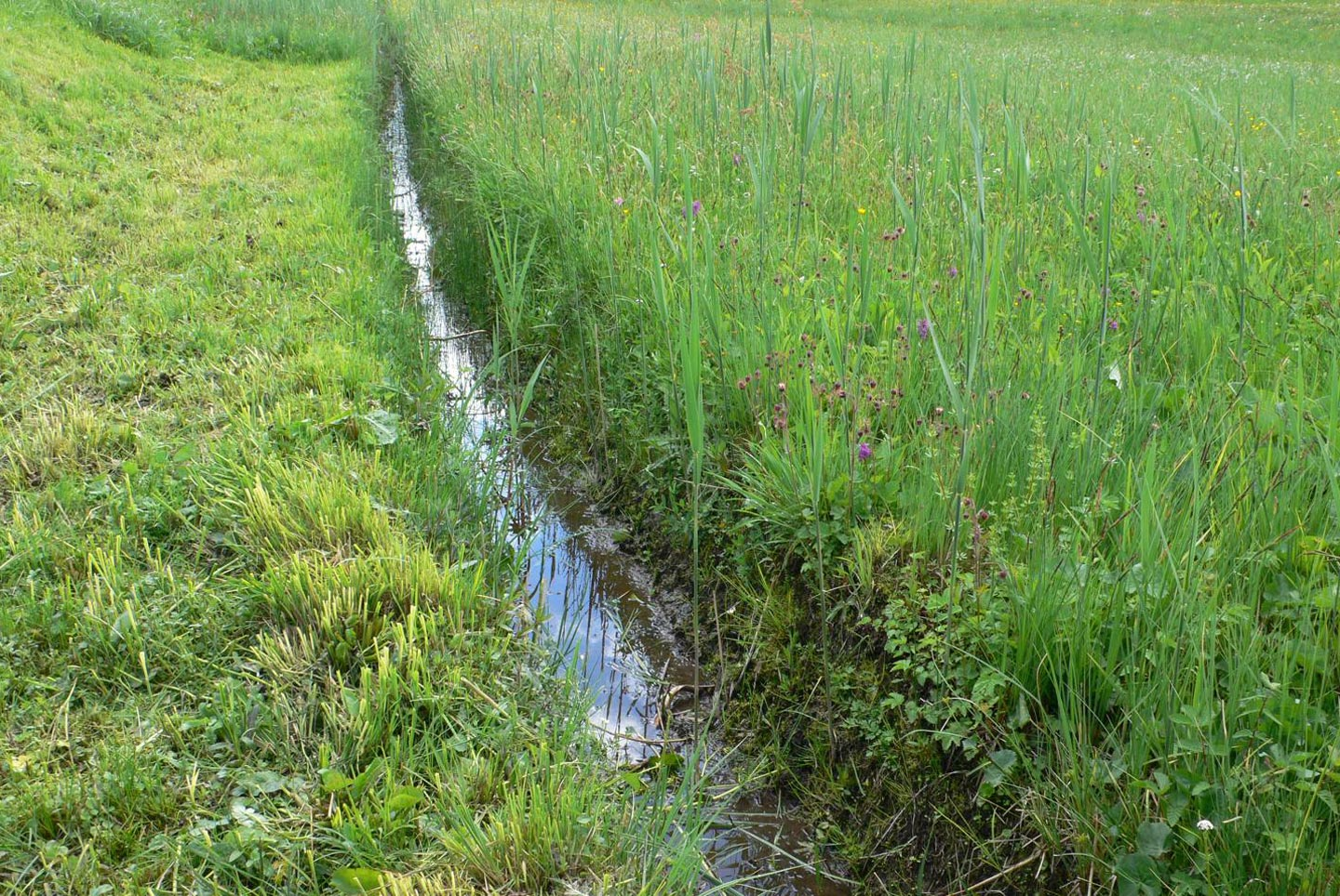 Ditch in wet small-sedge fen
